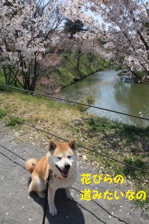 花びらの道