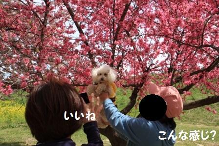 みかんちゃん撮影