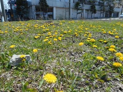 花が咲き始めた