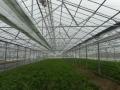 地熱発電と温室