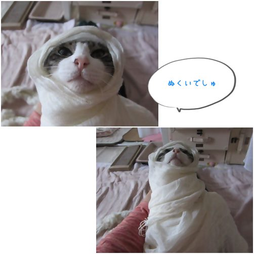 catsぬくい