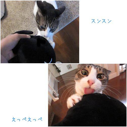 catsすんすn