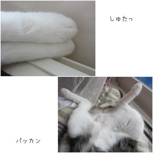catsぱっかん