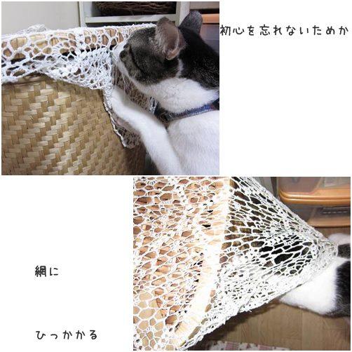 catsあみ