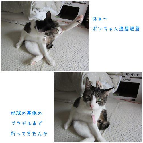 catsぶらじる