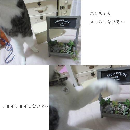 catsちょいちょい