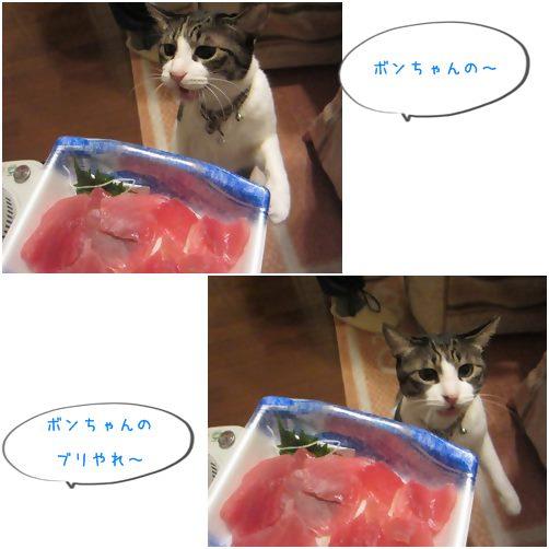 catsブリ