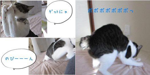 catsぼ