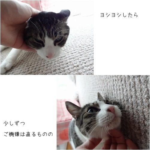 catsよしよし