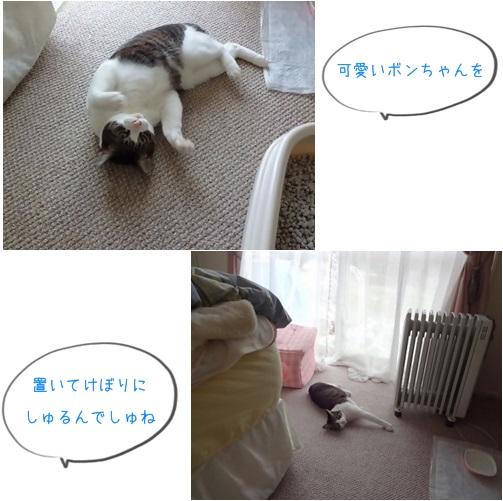 cats可愛い