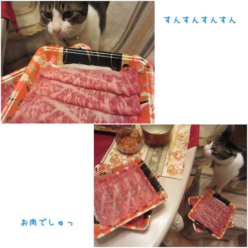 catsお肉
