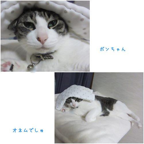 catsおねむ