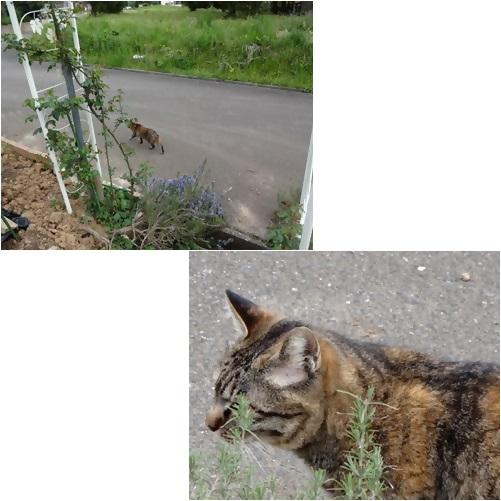 catsチビ