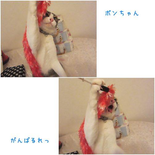 catsが