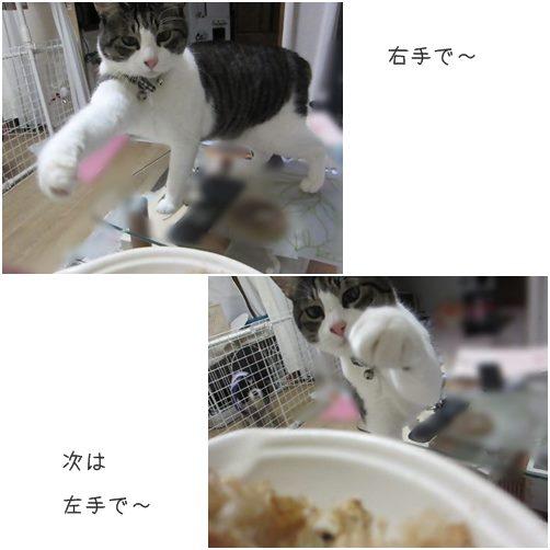 cats1_20140212193917351.jpg