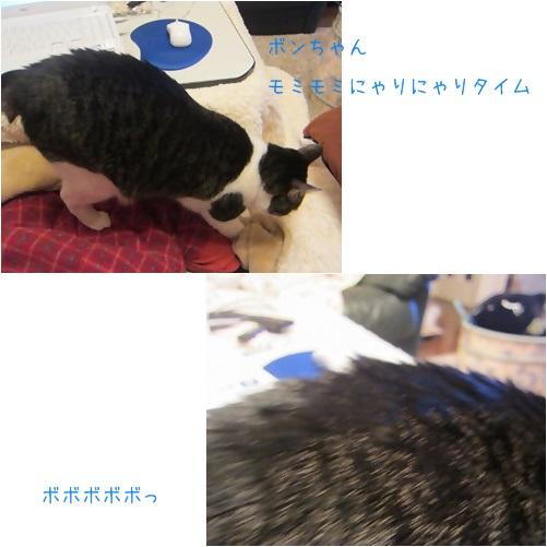 cats1_20140227022422703.jpg