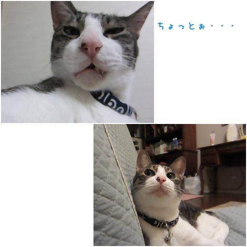 cats1_20140305210020211.jpg