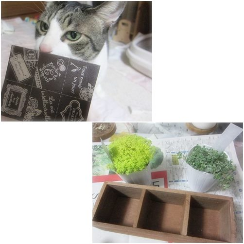 cats1_20140310183157f59.jpg