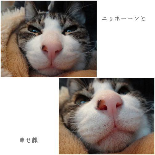cats1_2014032819323328f.jpg