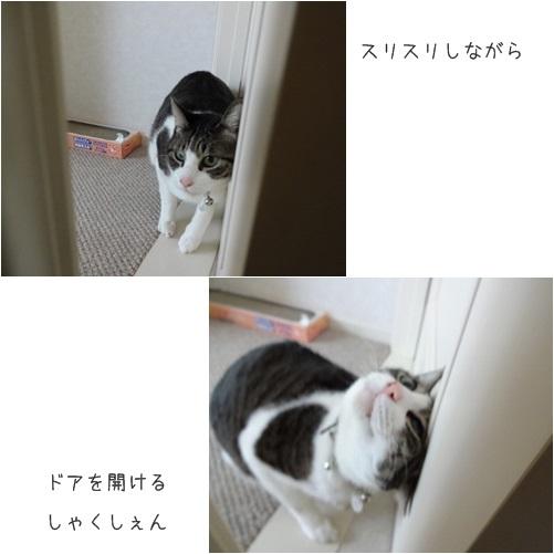 cats1_201404041833409ab.jpg