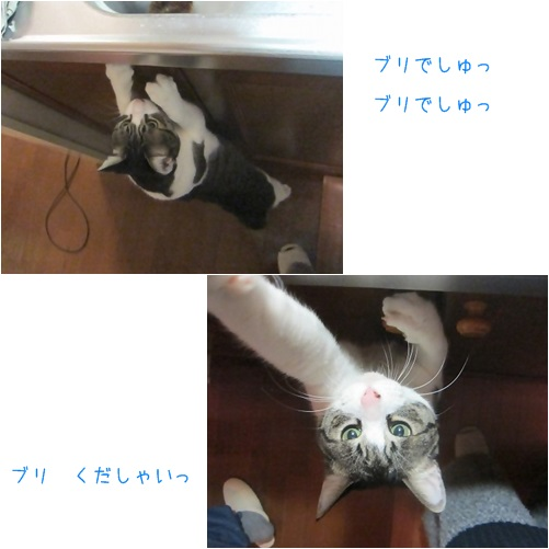 cats1_201404051535073d5.jpg