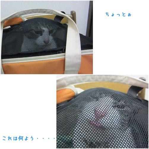 cats1_20140408232152c03.jpg