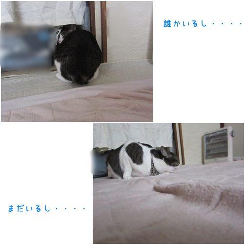 cats1_20140413012811908.jpg