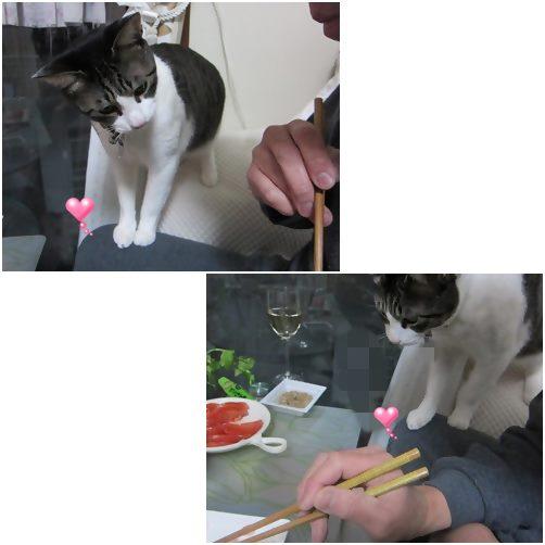 cats1_20140419190608b06.jpg