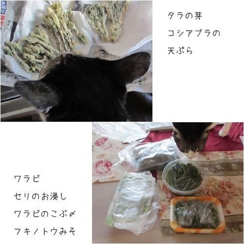 cats1_20140423230459e76.jpg