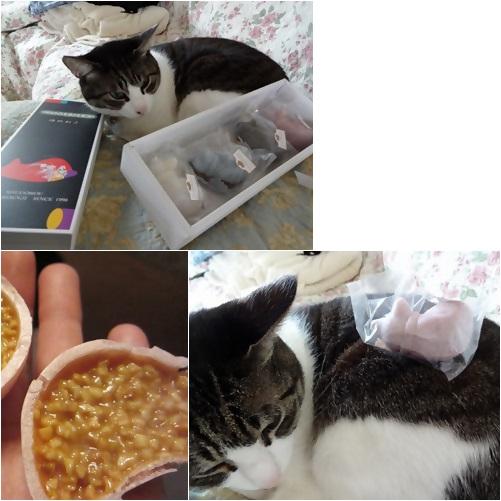cats1_201405051605118df.jpg