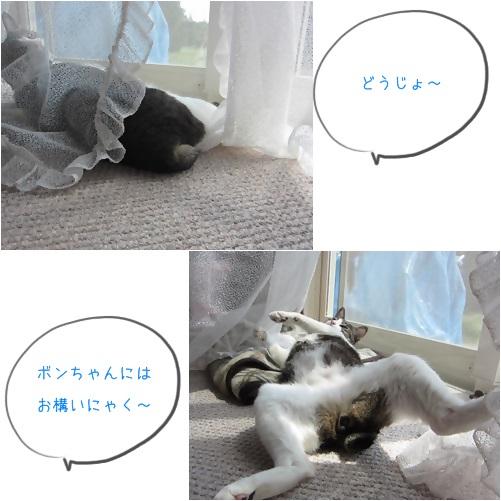 cats2_20140423230500b71.jpg