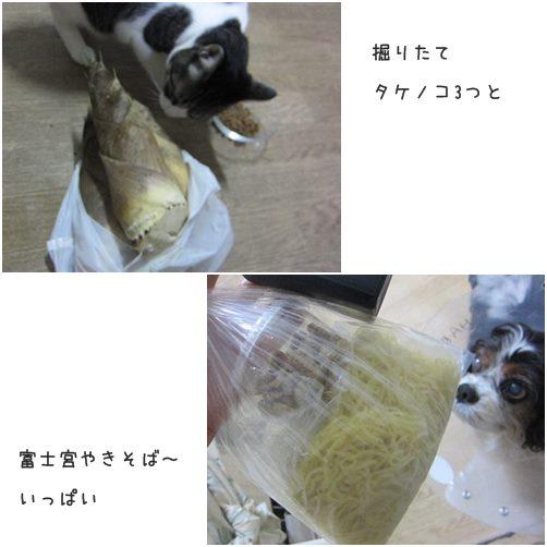 cats3_20140413012812e68.jpg