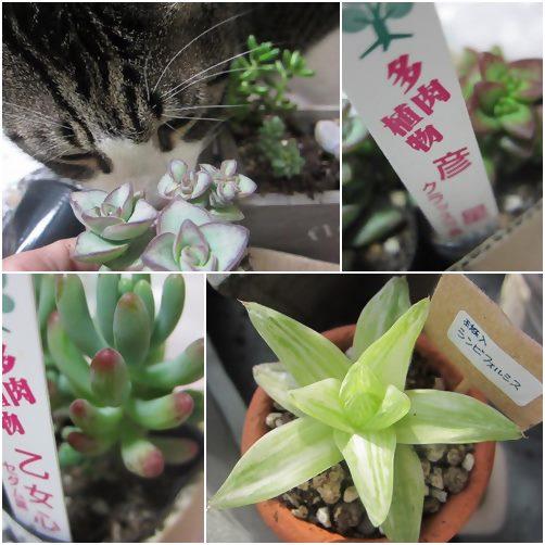 cats5_20140304195419f88.jpg
