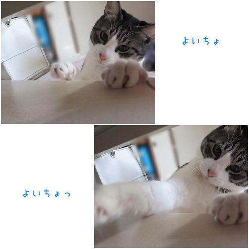 cats5_20140310191721239.jpg