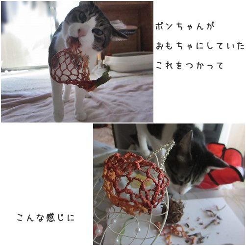 cats5_20140314190550d79.jpg