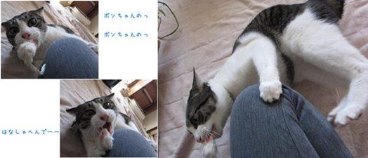 cats5_2014032418524024e.jpg