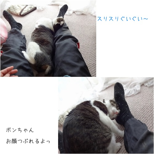 cats5_20140404173942bf1.jpg