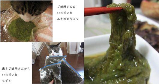 cats5_201404141954307d0.jpg