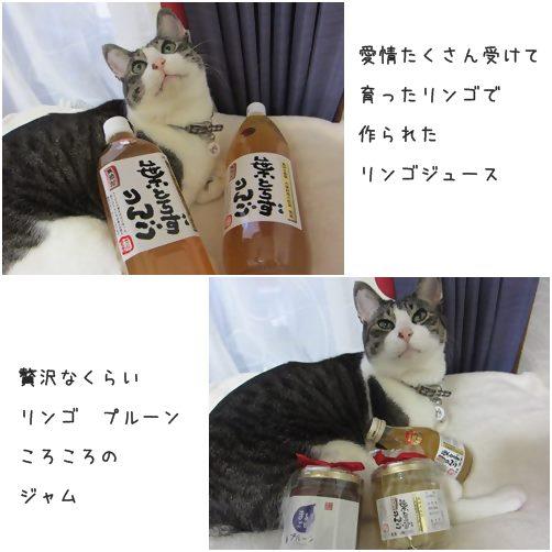 cats5_20140416201728a6d.jpg