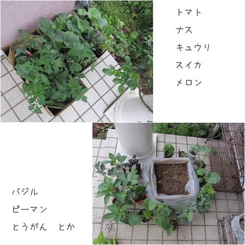 cats5_20140505173313aaa.jpg