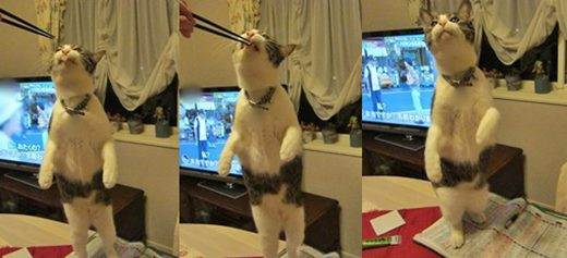 cats5_201405092341157f4.jpg