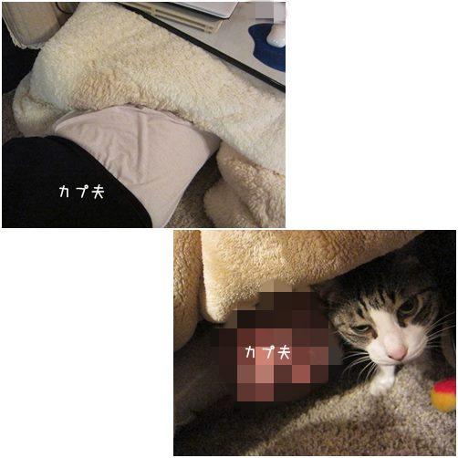 cats5_20140514202831b06.jpg