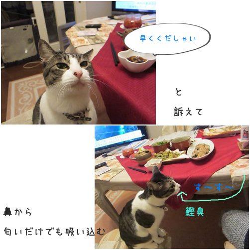cats6_20140308225733ae1.jpg