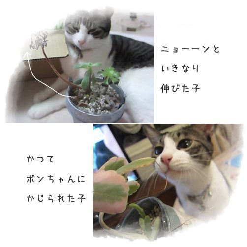 cats88.jpg