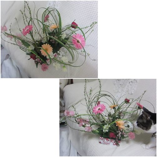 cats_20140205192857c69.jpg