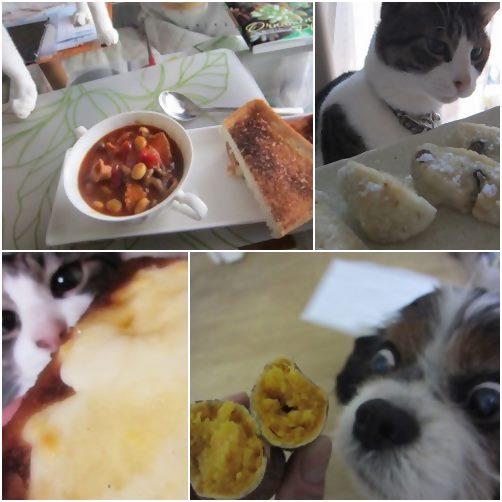 cats_20140212193915c79.jpg