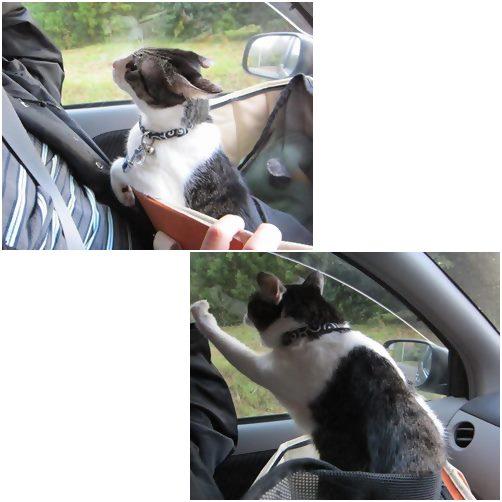 cats_2014021919161489a.jpg