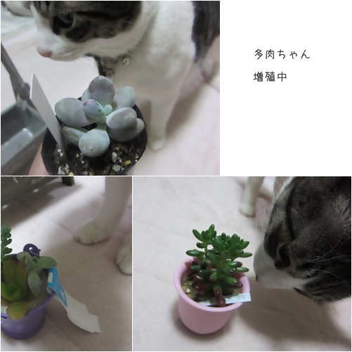 cats_201402241535409b8.jpg