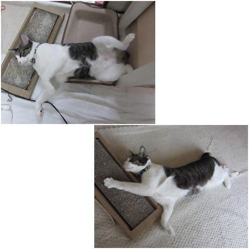 cats_20140301194448d60.jpg