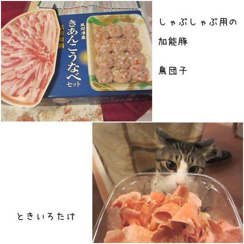 cats_20140303175914ff3.jpg